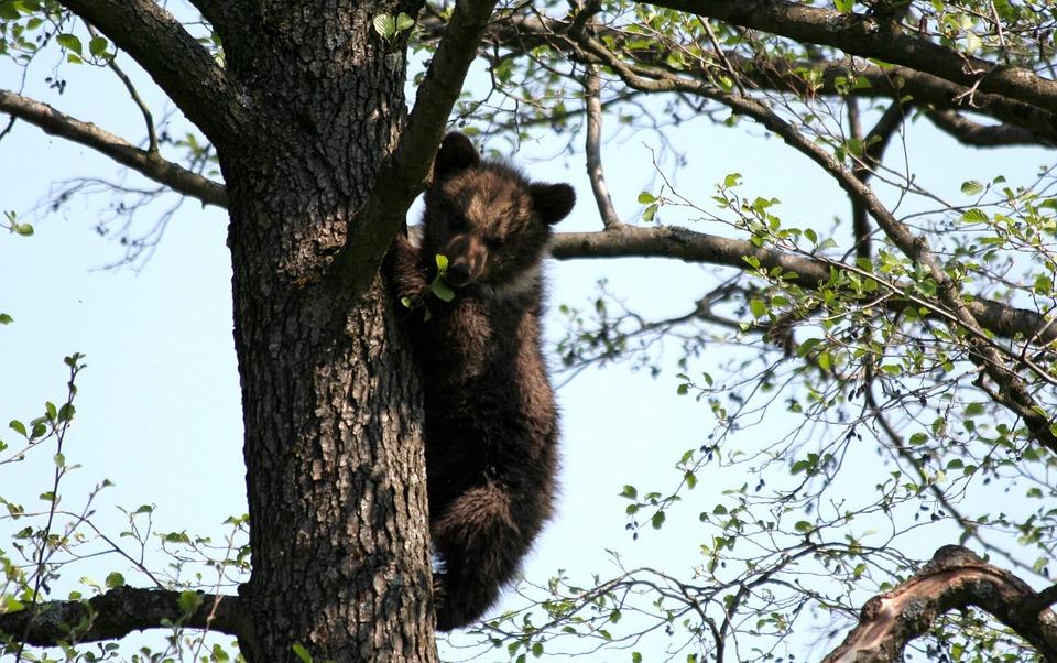 bear-75060_960_720